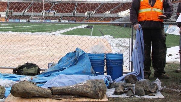 Bones discovered at Reser Stadium in Corvallis.