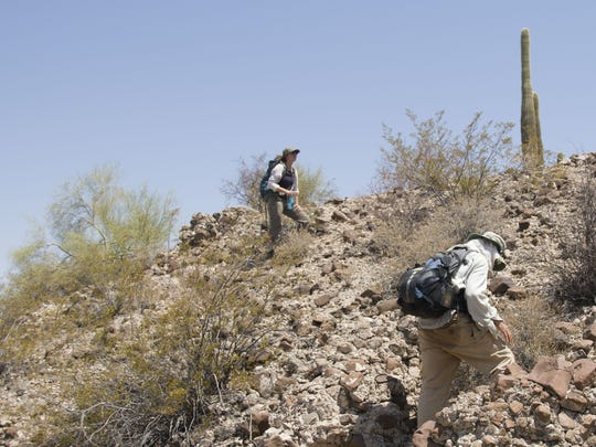 Volunteers from the humanitarian group No More Deaths search for the body of a missing migrant at the Organ Pipe Cactus National Monument in the western desert of Arizona on June 23, 2017.