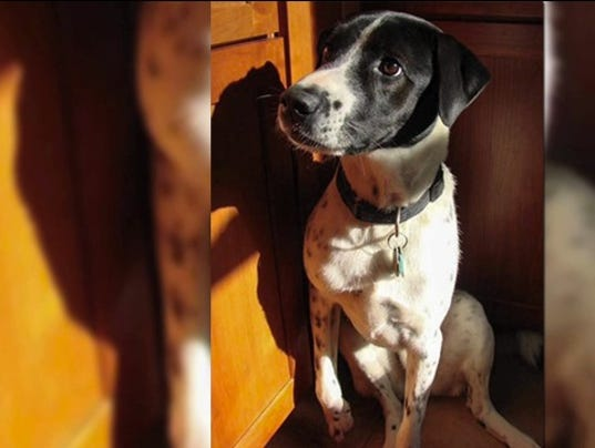 FDA investigating deadly dog treats