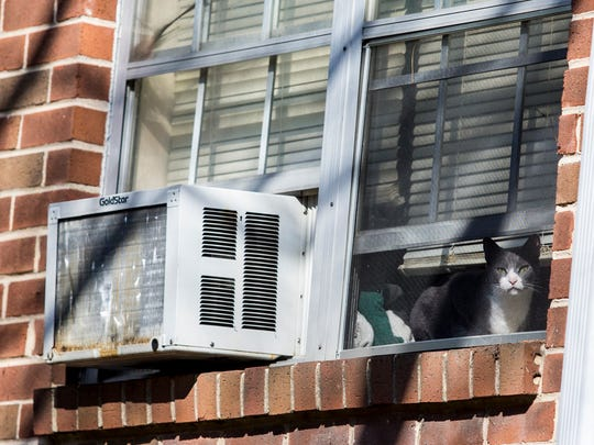 A cat rests in the window of an apartment in Building H of the Evergreen Apartments at Riverfront Heights near Elsmere on Monday afternoon.