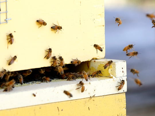 Honeybees fly in and out of a hive on Denise Palkovich's