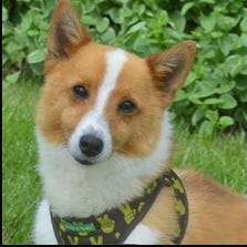Rusty, 3, is up for adoption.