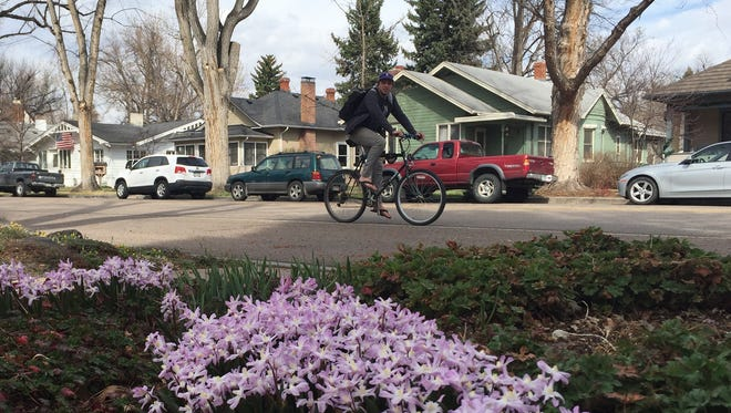 A cyclist rides past blooming flowers along Oak Street on Tuesday. The National Phenology Network tracks the onset of spring around the country by looking at factors like flowers blooming and leaves popping up on trees, and in Northern Colorado, that's happening about two weeks earlier than usual.
