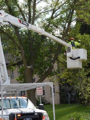 City workers remove branches from an emerald ash borer-infested