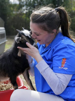 2017: Jenny Tartaglino of Normandy Beach, and educator and animal trainer, plays with the baby African pygmy goats at Six Flags Great Adventure and Safari in Jackson, NJ Monday February 27, 2017.