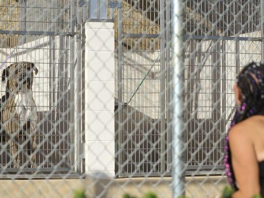 Armani was quarantined at Visalia's Animal Care Center