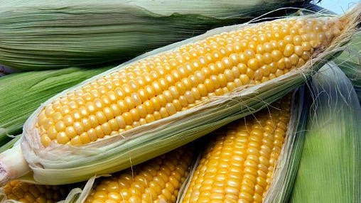 The Kellner Corn Fest is Saturday and Sunday.