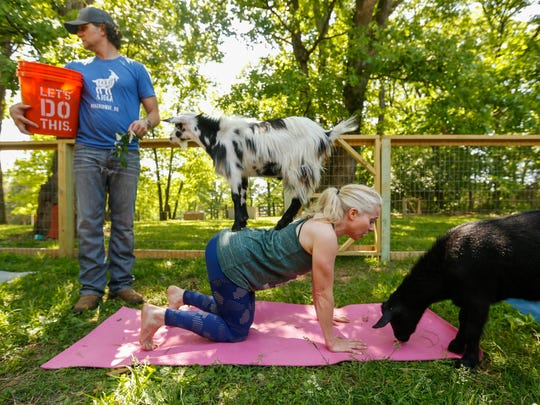 Stephanie Wubbena demonstrates a pose with a goat standing on her back during Goats and Yoga on Herding Dogs Farm in Rogersville on Saturday, May 19, 2018.