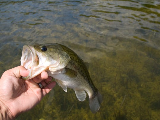 Msu accounting needed for freshwater fish for Fresh fish lansing mi