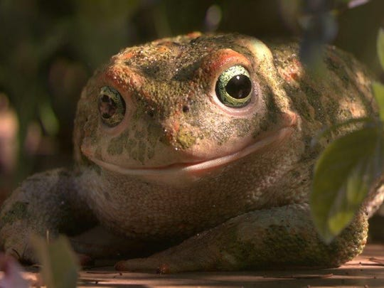 "Will the digitally animated amphibians of ""Garden Party"" live hoppily ever after?"