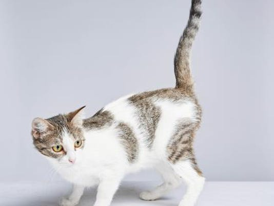636451367310516182-WDH-1106-Pet-of-the-Week-Mittens.jpg