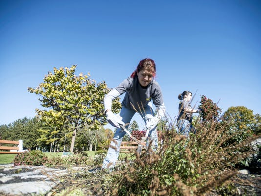 Shea Barlett trims a bush as employees from Sprint spent Friday helping to clean up South Hills Park in South Lebanon Township.