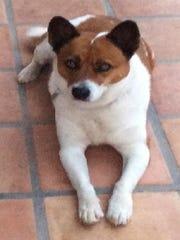 Raymond Grey's dog
