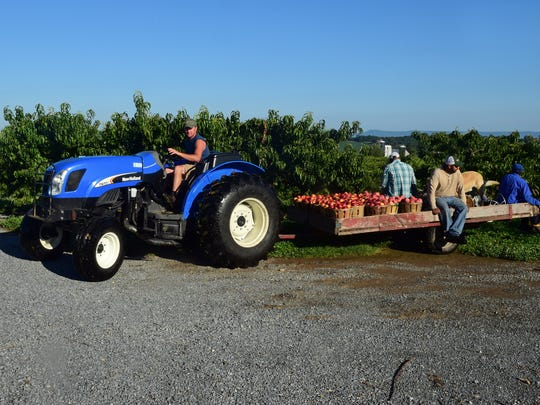 Sean Tracey and fruit pickers take a harvest back to a barn on Wednesday, August 9, 2017. Peaches and nectarines were being harvested on Wednesday, August 9, 2017 at Tracey's Orchard, 12483 Hollowell Church Road, Greencastle.