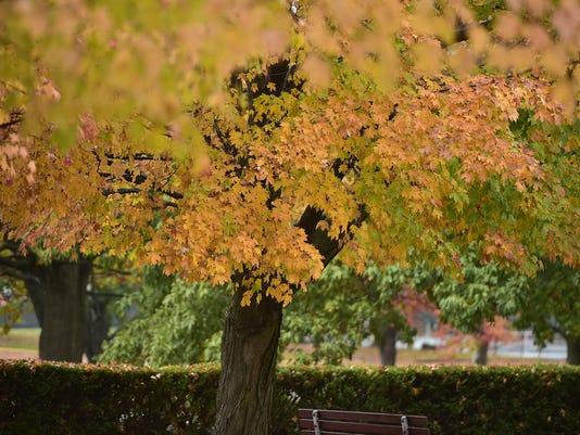 CPO-MWD-102716-autumn