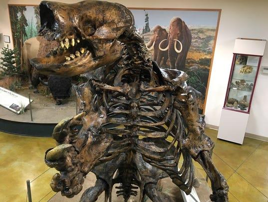 636404699451938424-BRK-giant-sloth-skeleton-display-1.jpg