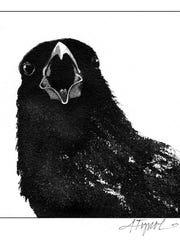 A crow sounds off.