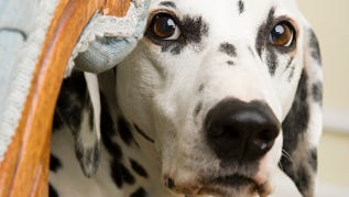 Pet expert Steve Dale offers tips to calm your pet's summer stress.