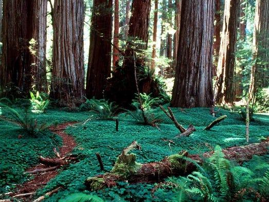 Ken Burns shares secrets of Redwood, Sequoia national parks