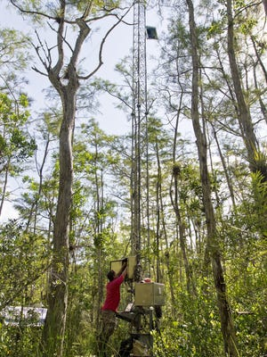Barclay Shoemaker, a research hydrologist for the U.S. Geological Survey, works on a repair at one of the USGS weather monitoring towers at Big Cypress Cypress National Preserve off Loop Road Monday morning.