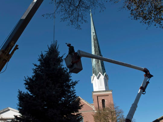 A Cumberland Valley Tree Service employee works from a bucket truck while helping to install the Chambersburg Christmas tree at Memorial Square on Monday, November 14, 2016. Terry and Twila Lautenslager donated this year's tree - a 25-ft. Concolor fir.