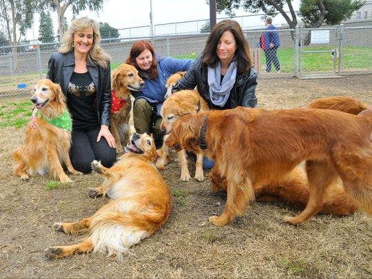 Golden Retriever CubbyBear who has a congenital disease affecting his front legs had his 9th birthday with his family and friends at Codey Kelly Bark Park on January 14, 2017.