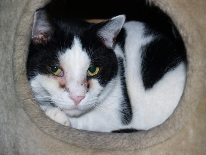 Delaware Humane Cats Adoption
