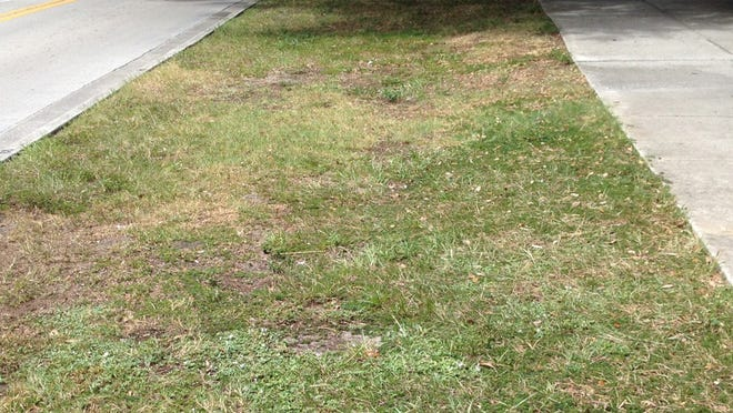 An area of dry grass along 14th Avenue and 21st Street in Vero Beach in August 2016.