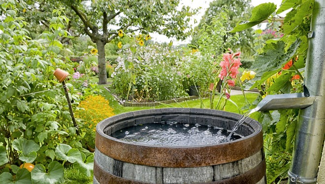 Rain barrels help with water conservation and plants seem to like it.
