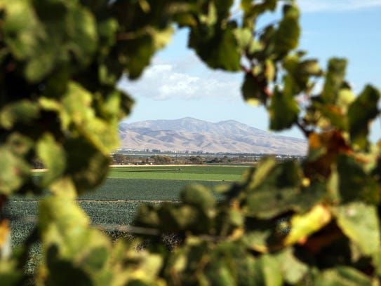 Pinnacles National Park is framed by grape vines which