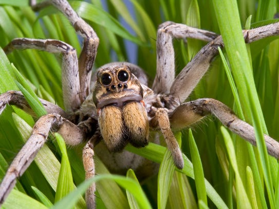 Eww: Arizona's creepiest, crawliest inhabitants explained