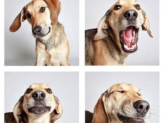 635642601491360457-doggy