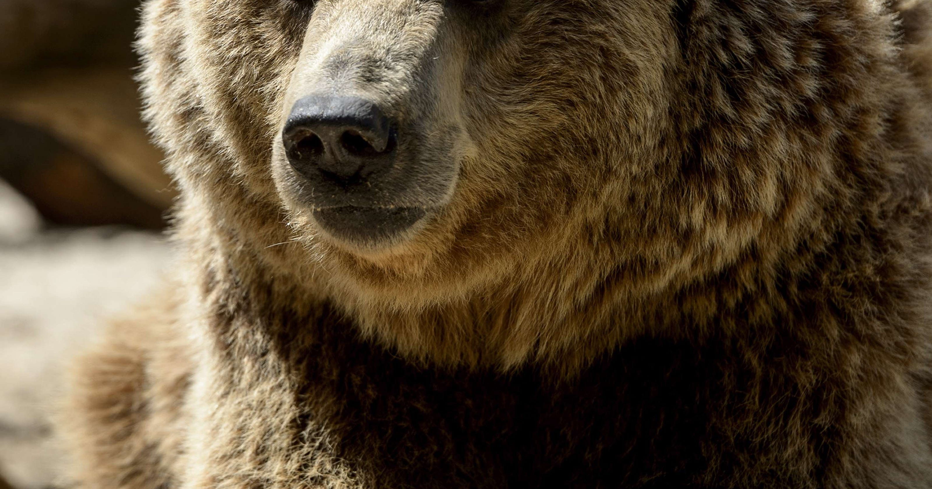 A Bear Market How to spot and...