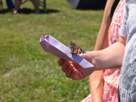 A butterfly rests on a paper container, preparing to