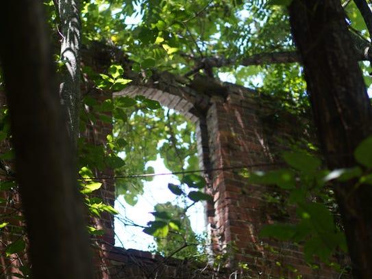 Trees grow up through the former Carolina Coal and