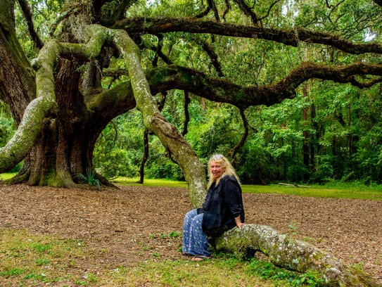 Sue Wight Miller rediscovers the Lichgate tree while