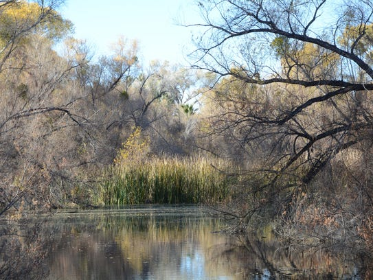 Palm Lake at the Hassayampa River Preserve near Wickenburg.