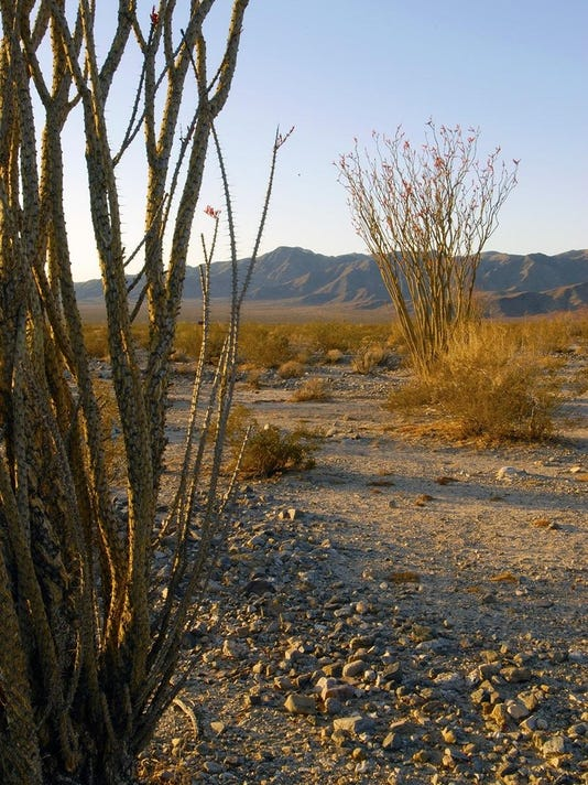 Ocotillo ties Coachella Valley to rest of Southwest