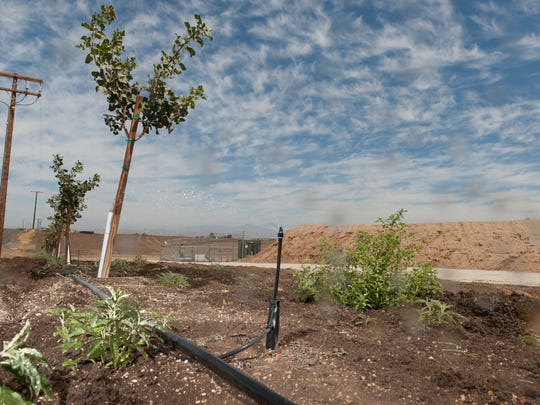 Sprays water 6-month-old Arias pistachio trees in Terra Bella on Monday, August 18, 2014.