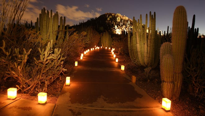 The glow of the luminarias lights up a path at Desert Botanical Garden leading to the Garden Butte.
