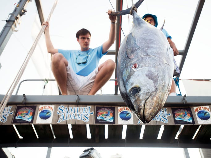 Billy Fox's tuna weighed in at 155 pounds in 2014.
