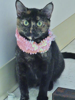 Pennyworth is a gorgeous tortie girl with expressive green eyes and striking fur. This 3-year-old lady just needs someone to give her a second chance and show her that humans can be counted on to love forever.