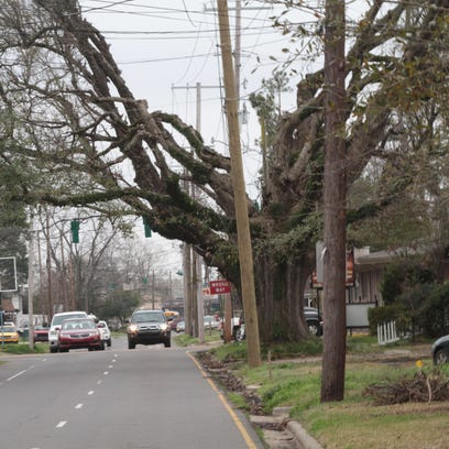 Trees along North 6th Street have been trimmed away