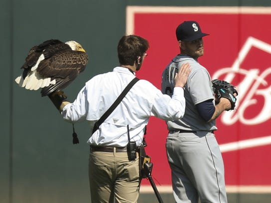 The handler for an American eagle that was to fly to the pitcher's mound during the national anthem, comforts Mariners starting pitcher James Paxton, a Canadian, after the eagle chose to land on his shoulder instead at Target Field in Minneapolis on April 5.