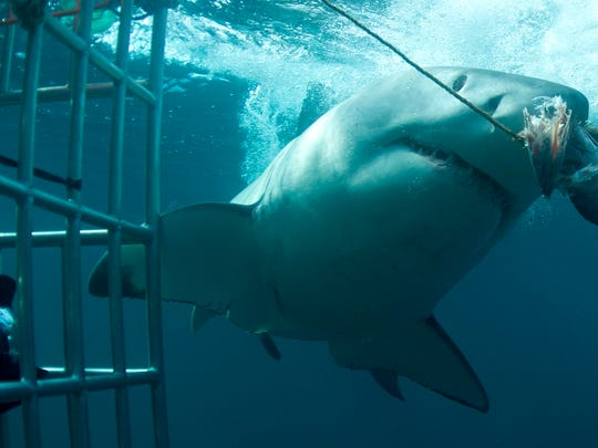 Shark Week returns to Discovery Channel.