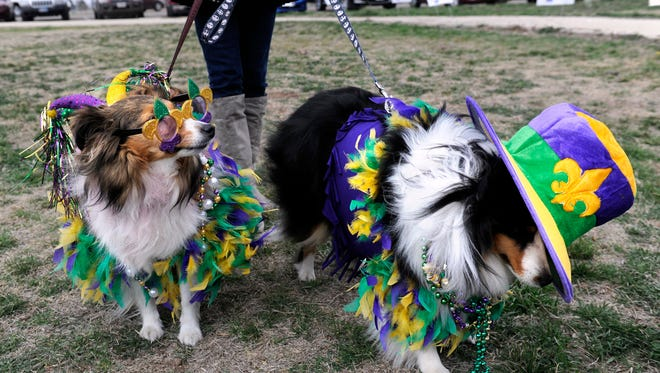Shelties Macy (left) and Max arrive in costume at the 2015 dog parade at Camp Barkeley Dog Park. This year's event in honor of Mardi Gras will take place March 4.