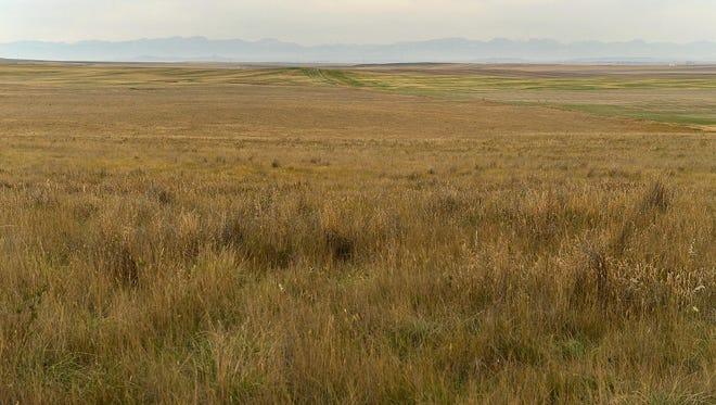 Conservation Reserve Program land being developed as upland game bird habitat in Teton County near Dutton.