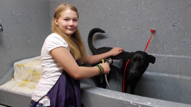 Brandee Nieman, 19, is learning pet grooming skills in her first job, working at the Bark Central business downtown. Neiman is a participant in Opportunities Inc.'s Youth Employment & Training Program. She is shown bathing the dog Watson.