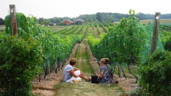 Parallel 44 Vineyard in Stangelville in Kewaunee County.