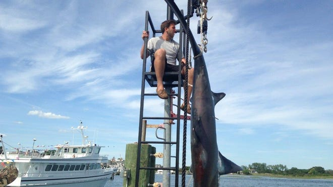 Weighmaster Joe Lewandowski checks the scale at Hoffman's Marina on the thresher shark caught by Seaquester out of Brielle in June.